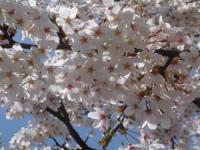 盘点:韩国春季适合漫步赏樱花好去处