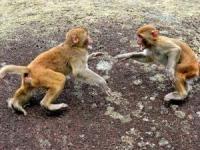 一战时两只猴子如何间接导致希腊20万士兵阵亡